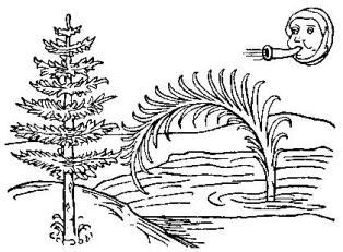 Fabeln des Aesop Das Schilfrohr