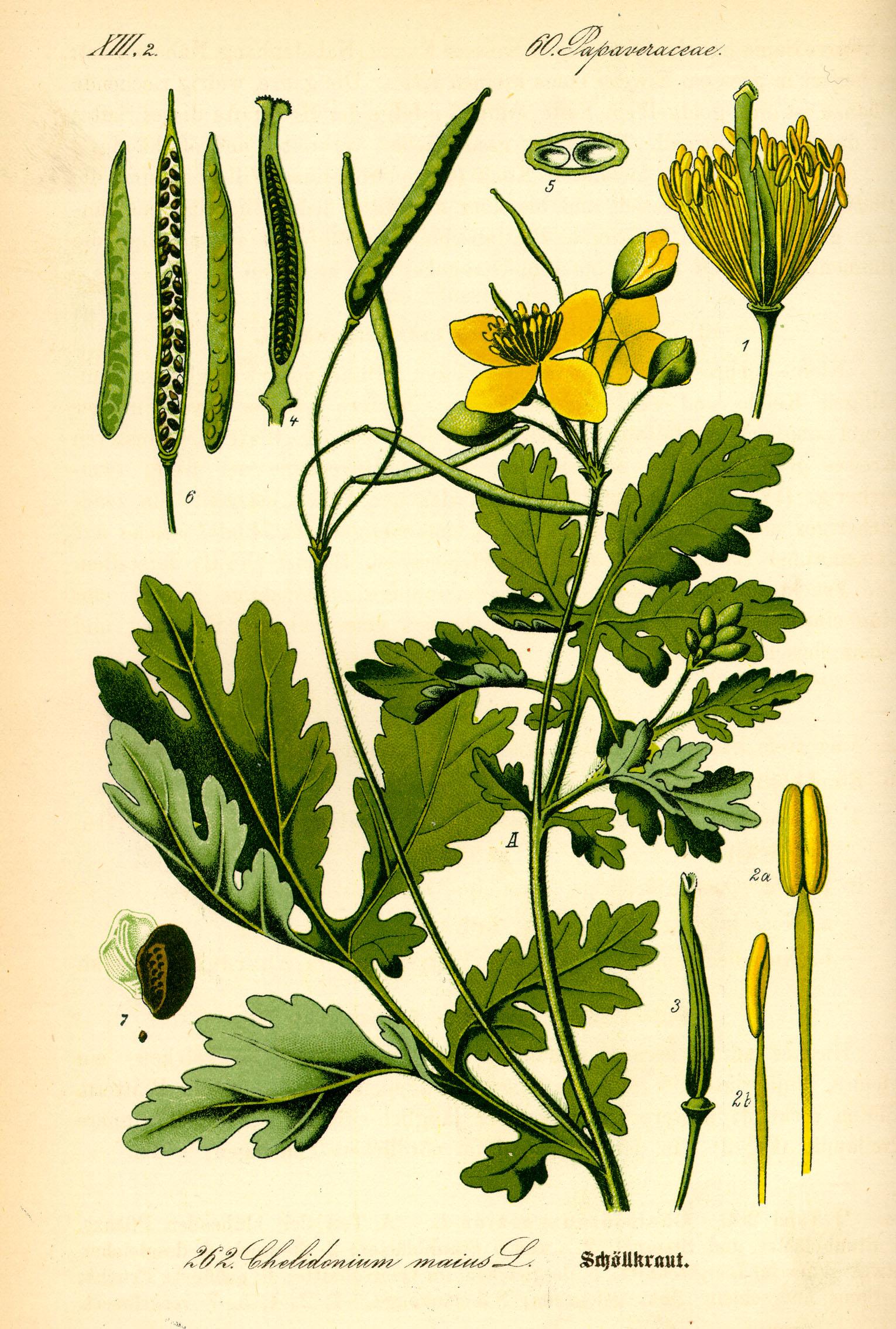 Фото растения и их корни 8137
